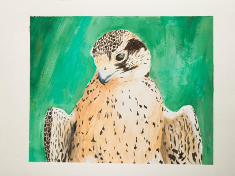 Lanner Falcon by EdgedFeather