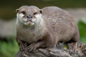 Yes I'm a Otter by LuntPhotography