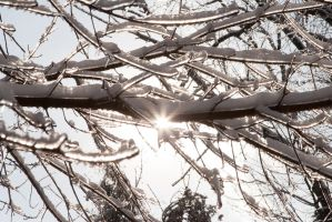Guildwood Ice - Sun and Ice by demonsDad