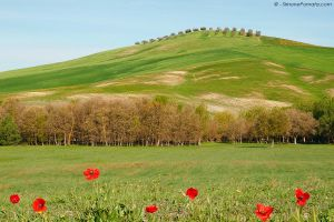 Mattina in Val d'Orcia by SimonePomata
