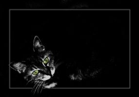 Lit Template - cat in the dark by rockgem