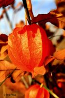 Autumn Impressions 8 by bluesgrass