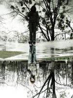 water mirror. by merely