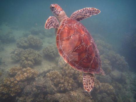 turtle by Marilor