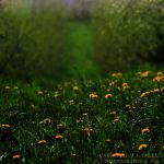 Green carpet by firepaved