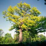 The Giving Tree by fotobug8