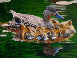 mama mallard by eymage