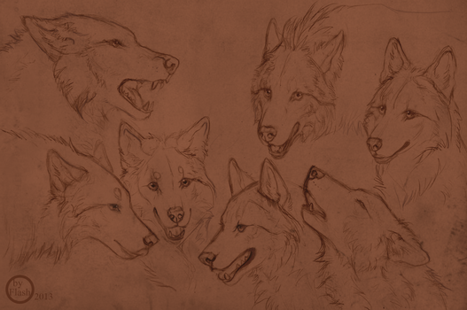 Wolf sketches by FlashW