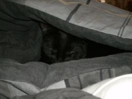 Blacky under my covers 3 by RoXoS92