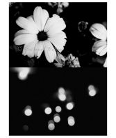 City Flowers by Catrinel-Cotae