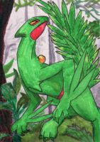 Sceptile ATC by applescruff
