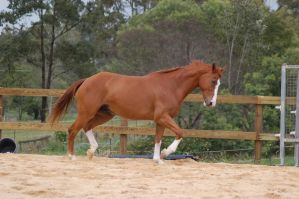ASH trot side on legs up by Chunga-Stock