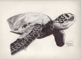 Brittany's Turtle by opeyuvadown