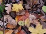 Fall Leaves 05 by c-car