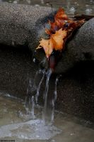 Autumn in water by EricLoConte