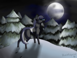 Cold Night by BlackRidgeWolf