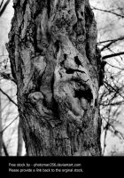 Tree spirit by photoman356
