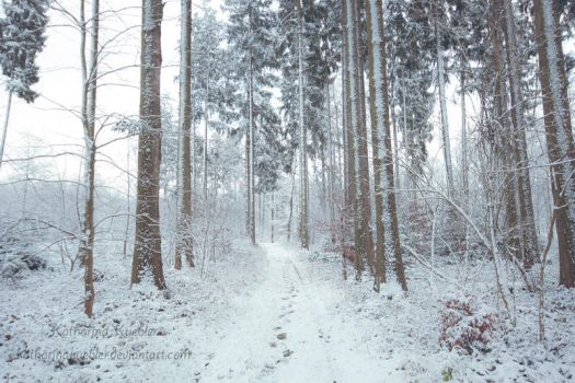 Winter Forest by KatharinaKuebler