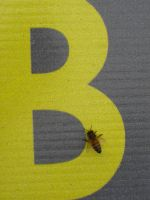 B for Bee by r-a-i-n-y