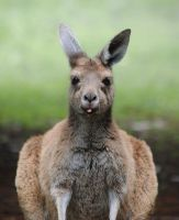 Kanga... by TamarViewStudio
