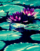 Water lily by Deeevilish