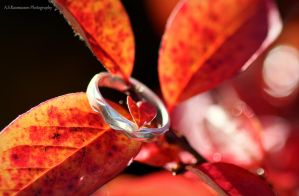 Love That Never Lets Go by photofreak385