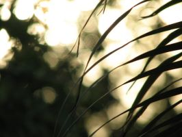 Light and Leaves 1 by Polly-Stock