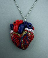 Anatomical Heart Necklace by MyOddities