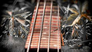 Bass  1080p by PraguePhotography