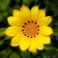 Yellow II by anjules