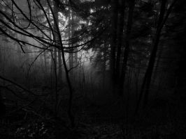 Enchanted Forest by Notandanavn