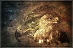 Bussard by greenfeed