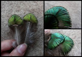 Indian Peafowl Feathers by CabinetCuriosities