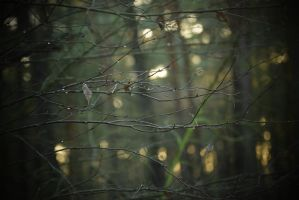 Tree.branches by MchllS