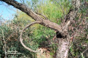 Twisted Branch by RavingEagleMedia