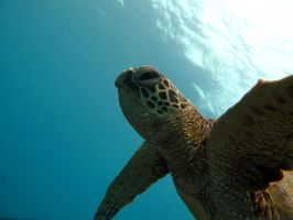 Honu Freedom by X5-442