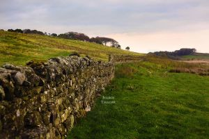 The Wall by fae-photography
