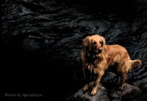 Dog on the North Fork by raze182