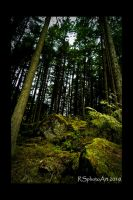Rock Bottomed Forest by RSphotoArt