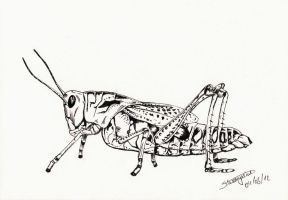 Grasshopper by Warr3