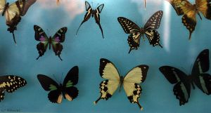 Butterflies1 by NHuval-stock