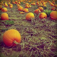 welcome to planet pumkin by fraeuleinamok