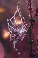 Spiderweb by Detailmagie