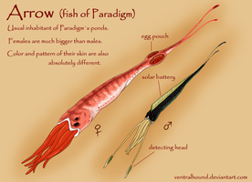 Arrow: fish of Paradigm by VentralHound