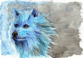 Blue Wolf by Cindy-R