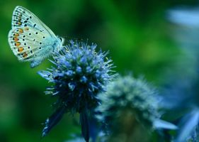Blue butterfly II by lazureblood