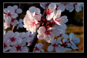 Spring is comming by Kemao