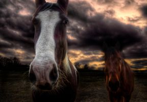 Dark Country III HDR by joelht74