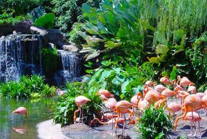 Flamingos by Lior-Art