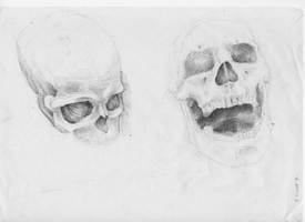 Scketches of skulls by hanestetico
